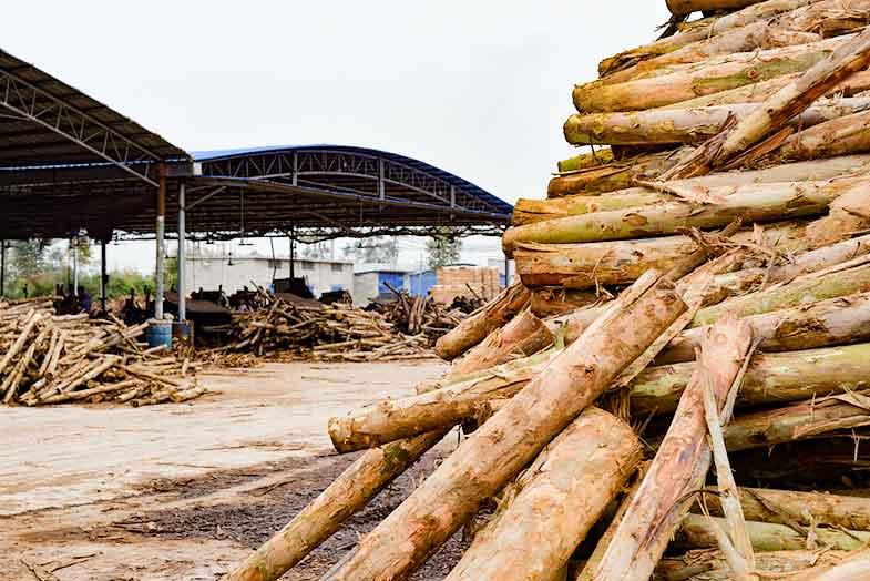 荷嘉木业木模板原材