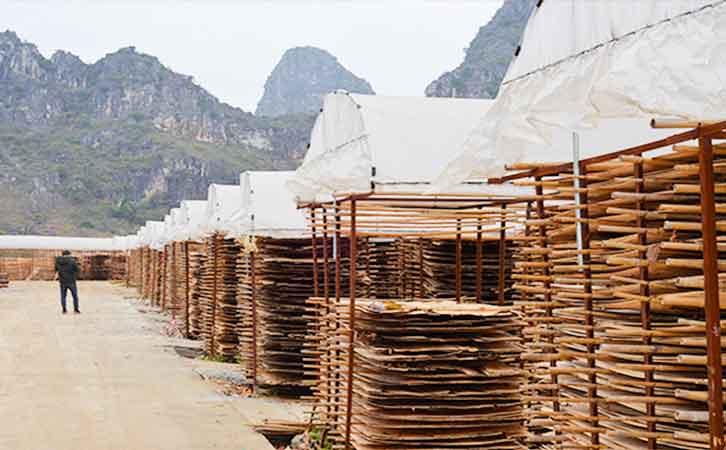 广西建筑用模板厂家荷嘉木业生产环境之晒板厂